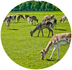 Visit Phoenix Park with Dublin Car Rental Special Offers